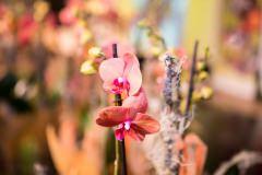 21. Kärntner Blumenolympiade 2018-102