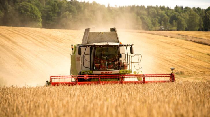 Laut dem heurigen Prüfbericht der AGES sind Kärntens Felder gentechnikfrei.