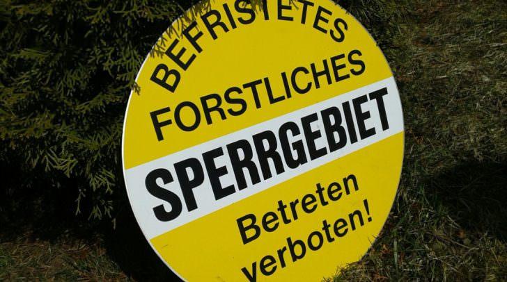 Vor allem beim Laubwaldbestand gibt es bis zu 80 Prozent Schäden des Laubholzes