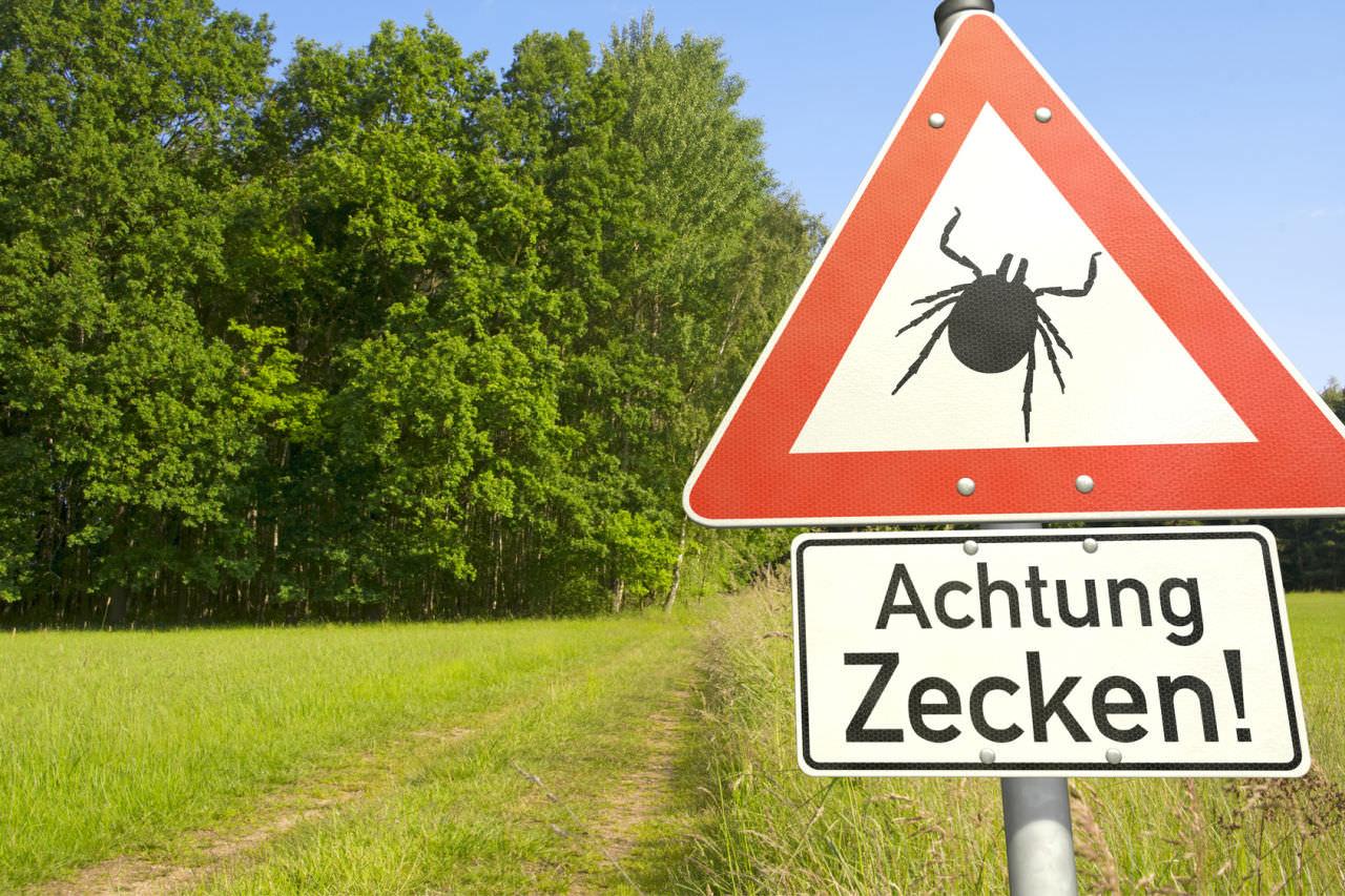 Achtung: Gefahr durch Zecken! zecke gefahr wiese