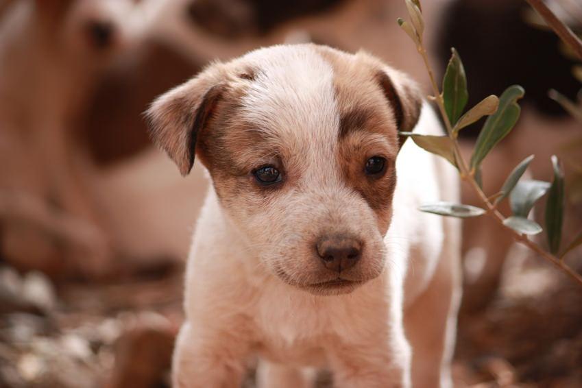 Welpe in der Wildnis Hund
