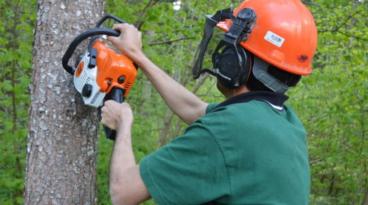 Beim Fällen eines Baumes wurde der bosnische Forstarbeiter von dem Ast getroffen.