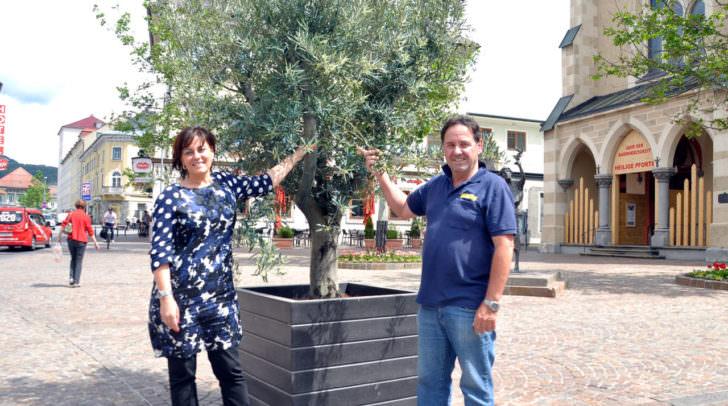 Vizebürgermeisterin Mag. a Dr. in Petra Oberrauner und Gartenmeister Kurt Wallner bei einem Olivenbaum am Nikolaiplatz.