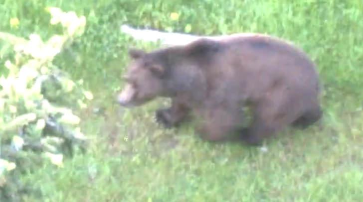 Vinzenz Rauscher sichtete heute auf der Eggeralm einen Bär. Ob es der gesuchte ist, ist nicht bekannt.