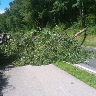 Dieser Baum stürzte auf die Straße – die FF Töschling war im Einsatz