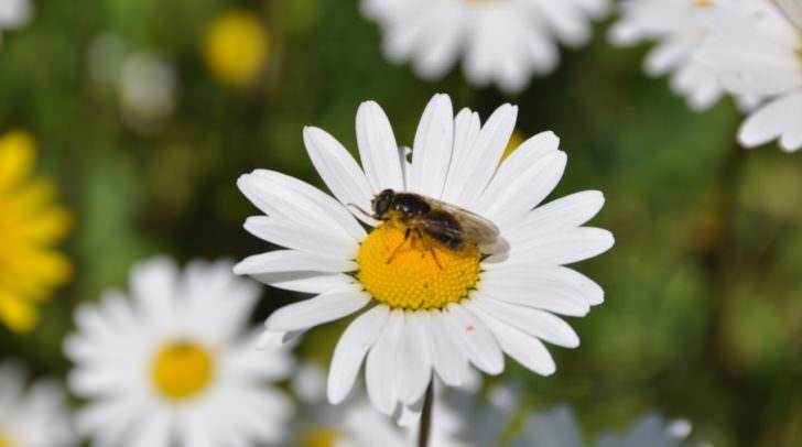 Initiative für das Wohl der Bienen