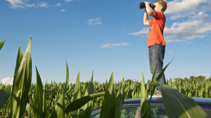 Orientierung maisfeld