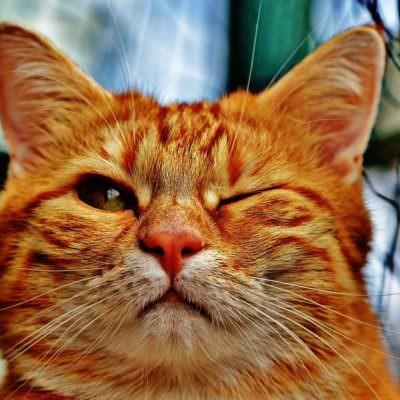 katze cat-1333926_960_720