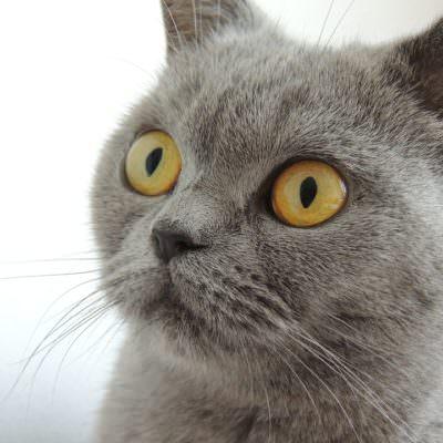 katze cat-179842_960_720