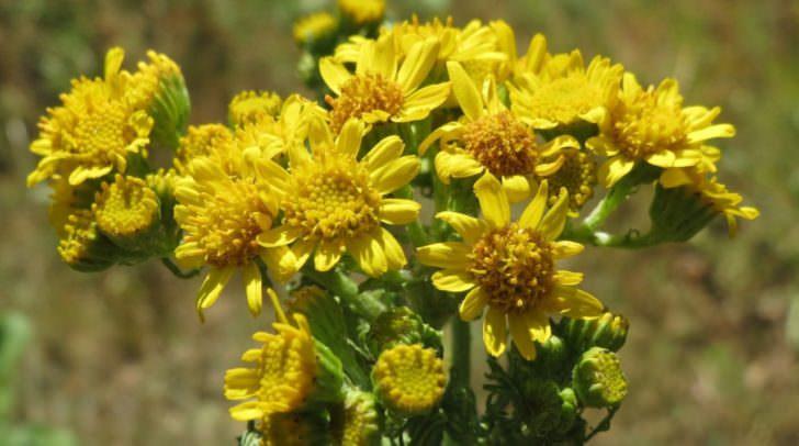 Die heurige Ausbreitung der Pollen fällt überdurchschnittlich hoch aus.