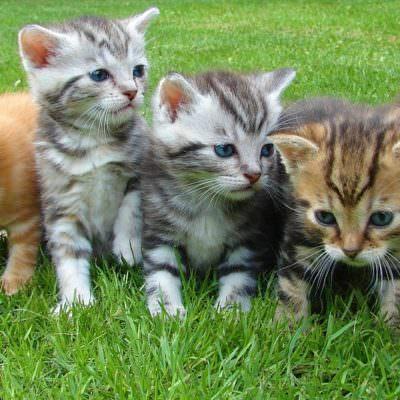katzen kittens-555822_960_720