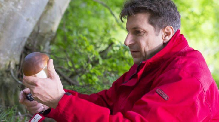 Mann sammelt Pilze