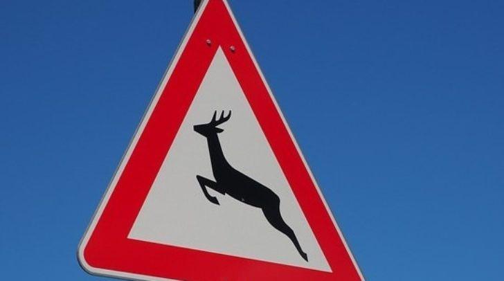Insgesamt 110 akustische und optische Wildwarner, die Rehe und anderes Wild von den Straßen fernhalten sollen, wurden in der vergangenen Woche gestohlen.