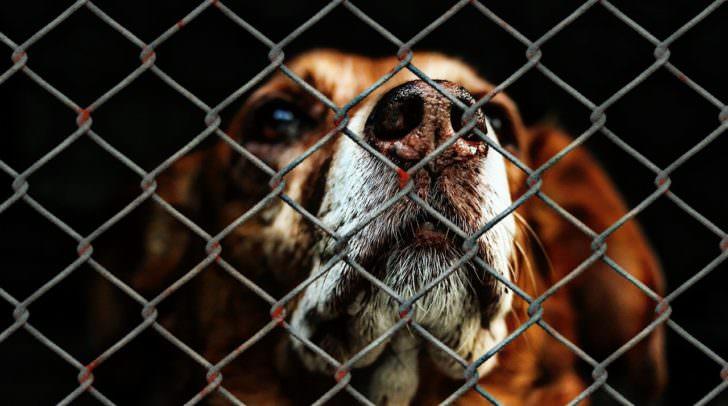 animal-welfare-1116203_1280
