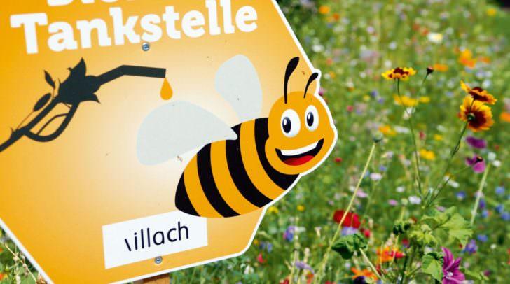 """Die fleißigen Bienen """"fliegen"""" auf Villach."""