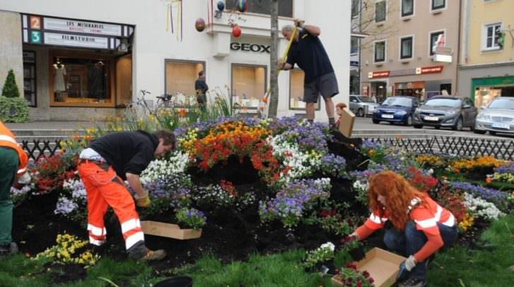 Die Mitarbeiterinnen und Mitarbeiter des Villacher Stadtgartens bauen am 2. Mai die Frühlingslandschaft auf dem Rathausplatz ab. Die Blumen werden von Vizebürgermeisterin Dr.in Petra Oberraumer an die Passanten verschenkt.