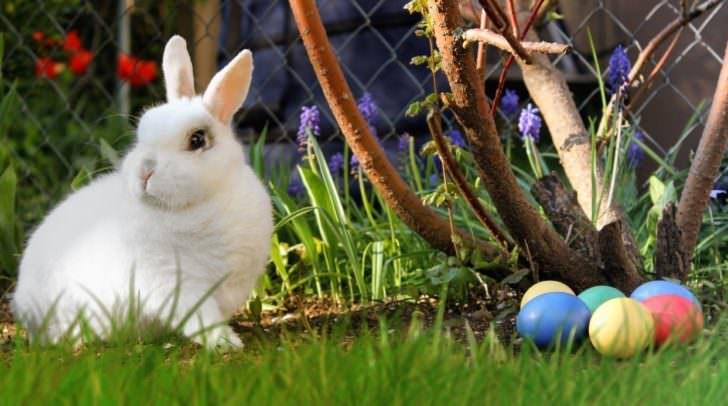 Die Rabbit Games versprechen Spaß für die ganze Familie. Im gesamten V-Bowl-Areal werden Gutscheine für tolle Preise versteckt. Wer suchet, der findet!
