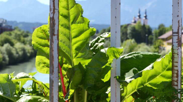 Auf vordefinierten Flächen und in Hochbeeten können Bürgerinnen und Bürger wie im eigenen Hausgarten Obst und Gemüse anbauen, ernten und gleich frisch genießen.