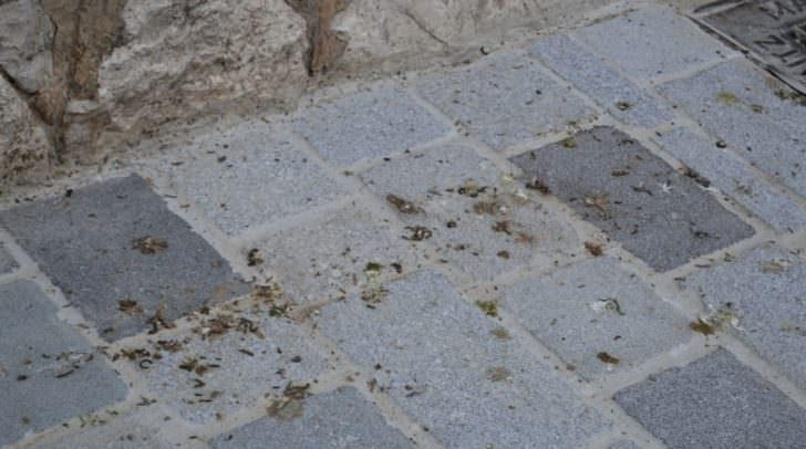 Taubenkot in der Stadt und am See als Plage.