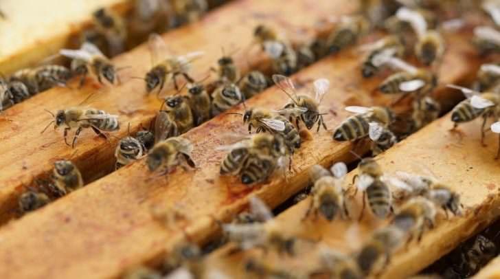 Durch den Bee-O-Meter können die Bienen überwacht und äußere Einflüsse wie etwa ein erhöhter Pestizidanteil in der Luft, rasch erkannt werden.
