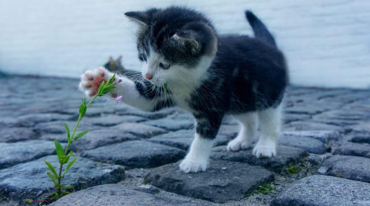 Die kranke Katze wurde gefunden und dem Tierheim übergeben.