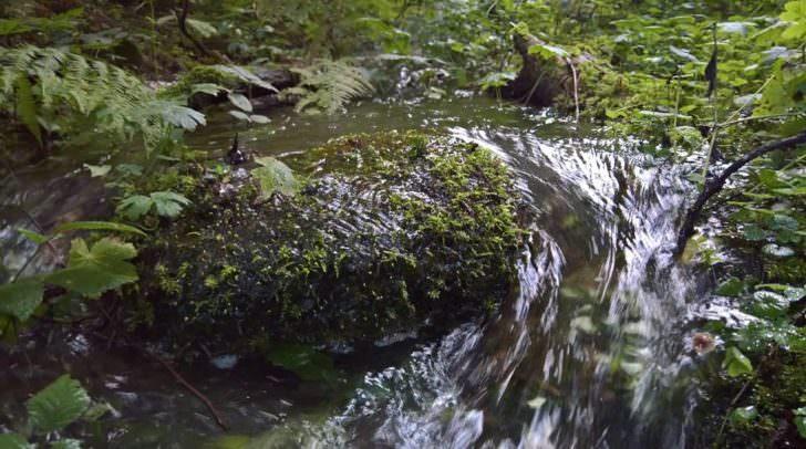 Unser Wasser – was für ein Gut