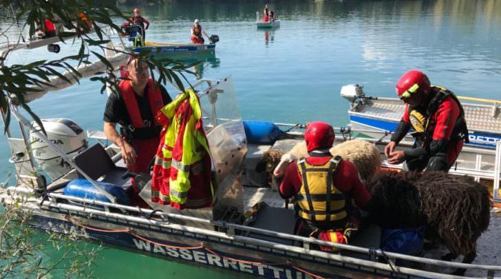Eine besondere Herausforderung stellte die Evakuierung von 20 Schafen mit den Rettungsbooten der ÖWR dar.
