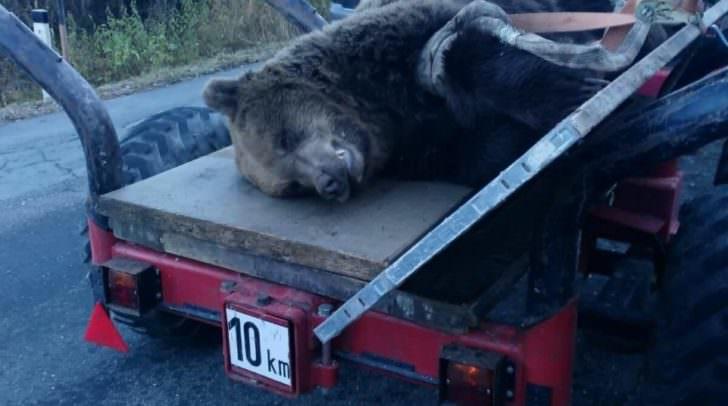 Abtransport des Bären