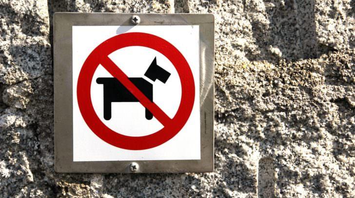Denise Pichler wurde wegen ihrer beiden Hunde von vielen Vermietern abgelehnt.