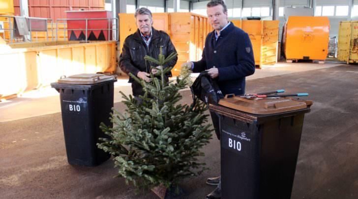 Entsorgungsreferent Stadtrat Wolfgang Germ und Abteilungsleiter Karl Weger zeigen die richtige Christbaumentsorgung vor.