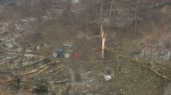 Der Baum brach oberhalb der Schnittstelle und fiel auf den Arbeiter.