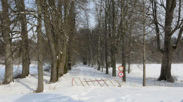 Die vierreihige Allee zwischen Schloss und Drau ist seit Mai 2015 aus Sicherheitsgründen komplett gesperrt. Sie war bei Spaziergängern beliebt.