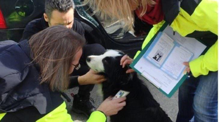 Auslesen des Hundechips durch die Amtstierärzte