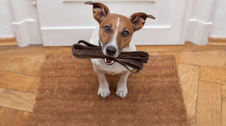 Hätte die Hundehalterin ihren Hund anleinen müssen?