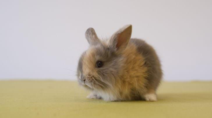 Schecki ist ein schnuckliges Kaninchenbaby das Abenteuer sucht.