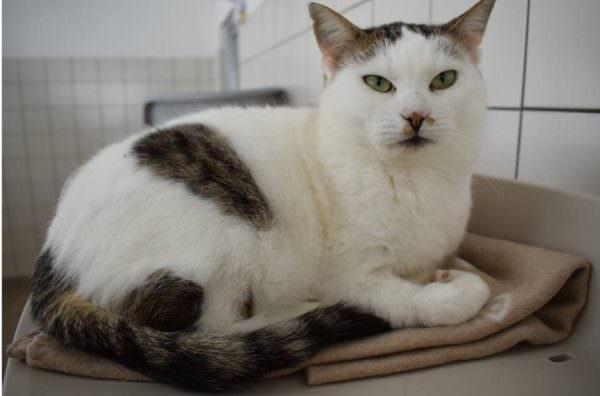 Cindy ist eine sanftmütige, ruhige Katze, die es gerne stressfrei hat.