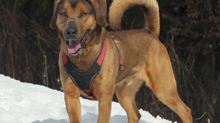 Jake ist ein sportlicher Hund der gern draußen ist.