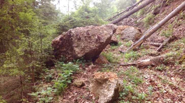 Ca. 300 Tonnen Gestein stürzten bei Gurnitz ab und sorgten für Entwurzelungen der darunterliegenden Waldschneise.