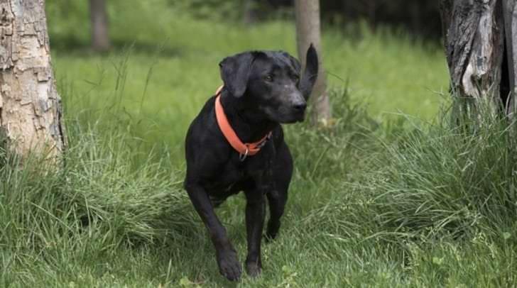 Mit dem freundlichen Hund Igor hat man einen treuen Begleiter an seiner Seite.