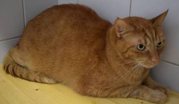 Die verschmuste Samtpfote Garfield sucht einen neuen Kuschelplatz.