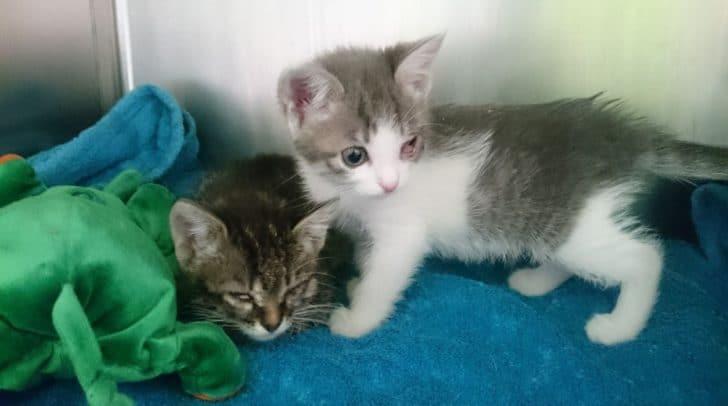 Damit keine ungewollten Katzenbabys mehr geboren werden braucht das TiKo Lebendfallen.