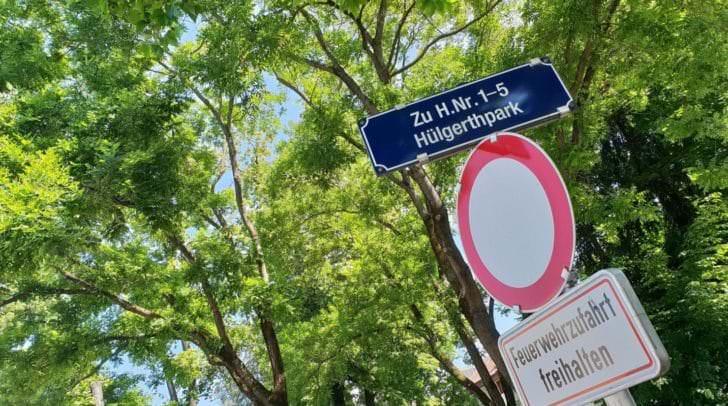 Im Hülgerthpark steht die kranke Buche, die im Laufe des Juni gefällt werden soll.