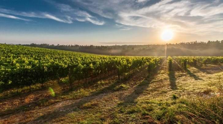 Moldawien ist eines der größten Weinanbauländer.