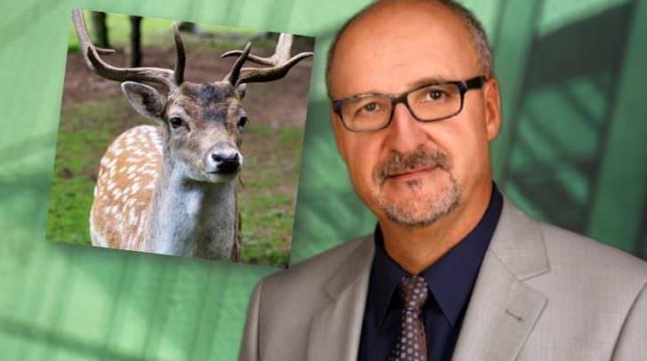 Bürgermeister Klaus Glanznig möchte das Rotwild in Sattendorf nicht ausrotten, zum Schutz der Wälder müsse der Bestand aber reduziert werden.