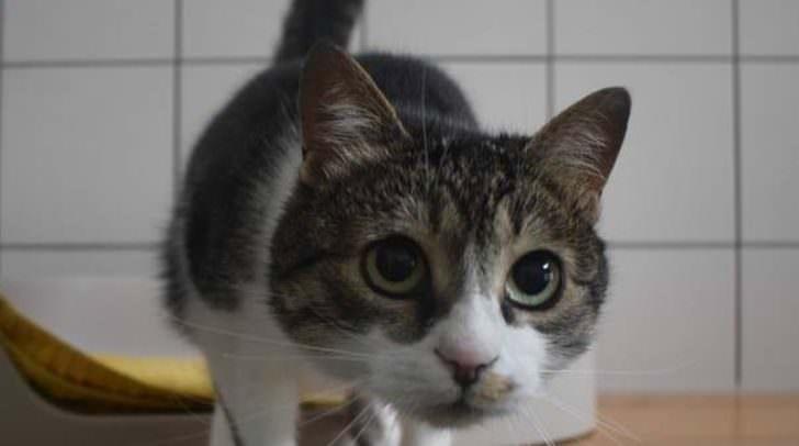 Kuschelkatze Lily sucht ein neues zu Hause.