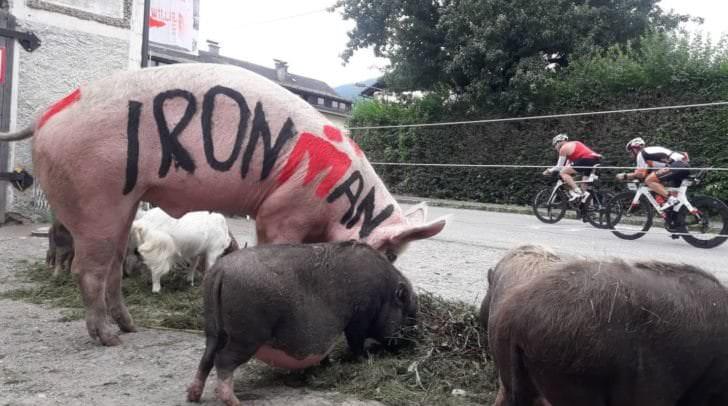 Schwein Schnitzel feuert die Ironman Teilnehmer an