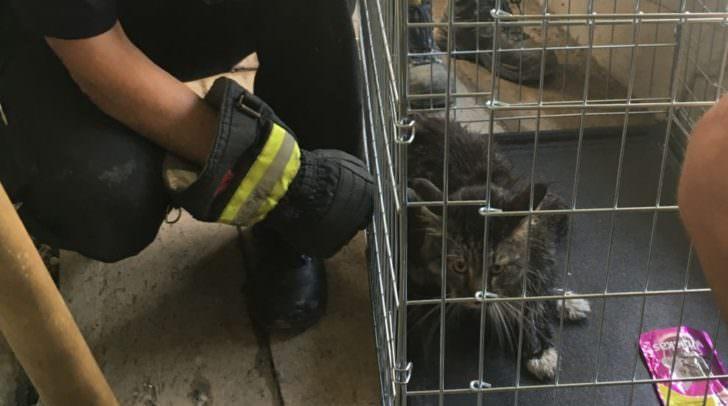Um ein erneutes Flüchten zu verhindern, wurde die Katze in eine Transportbox der Feuerwehr gelegt.
