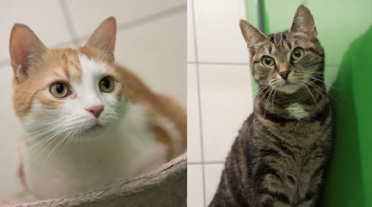Liebe auf den ersten Blick: Katzenpärchen sucht ein gemeinsames zu Hause.