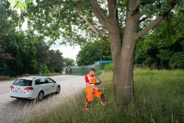 ÖBf-Baumexperte beim Aufnehmen von Baumdaten.