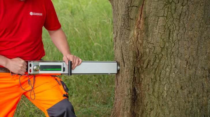 Messung der Holzdichte mit Resistograph